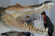 Ancient croc discovered in Dorset – and we had them here too