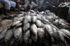 EU ministers ban trawlers from discarding fish