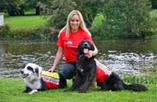 Irish Search Dogs and Missing Persons' Helpline join forces