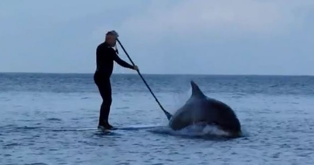 Lucky people get up close and personal with Fungi the Dolphin