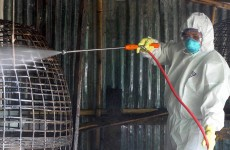 9-year-old boy dies from bird flu in Cambodia