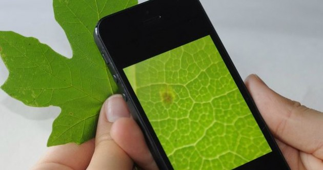 Weird Wide Web: There's a Netflix for books and your phone can be a microscope