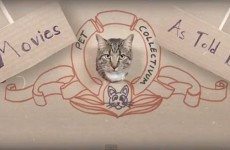 WATCH: The Hunger Games, as reenacted by cats