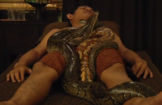 People are now paying to have snakes slither all over their body
