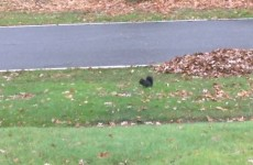 Adorable squirrel can't stop fainting